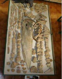 Museo ciencias naturales3
