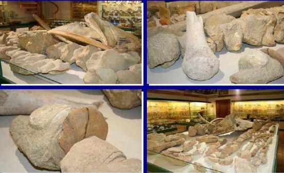 Museo ciencias naturales6